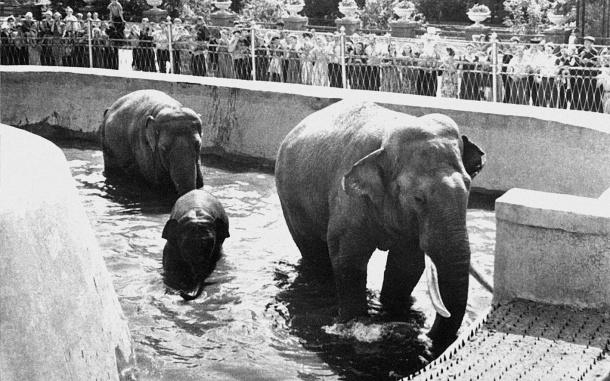 pobeg-zoo
