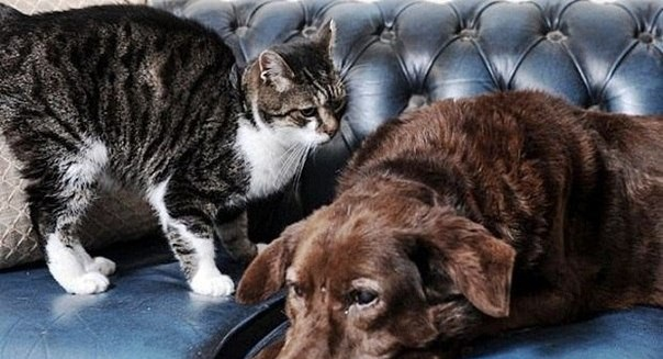 cat-and-dog-2