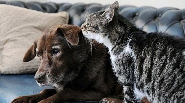 cat-and-dog-3