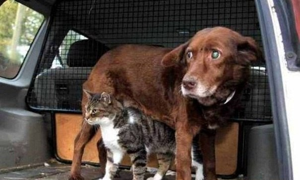 cat-and-dog-5