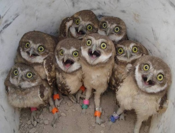 owls-photo-day-funny