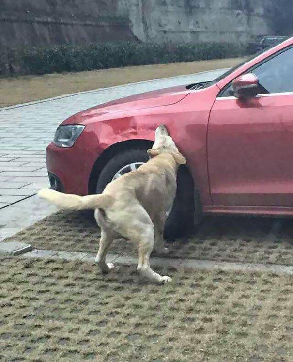 собака3