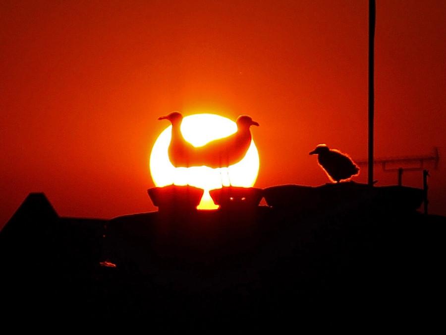 Силуэты чаек на крыше в лучах заходящего солнца в Лондоне, Англия