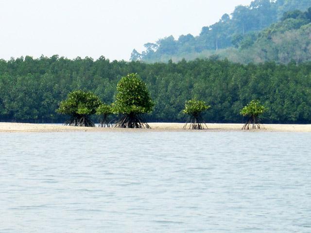 деревья стоящие на корнях