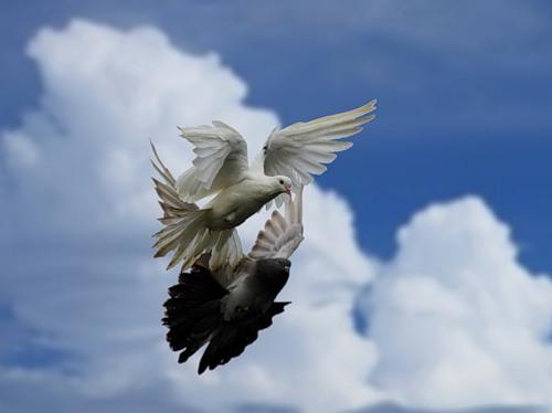 Птички - 2
