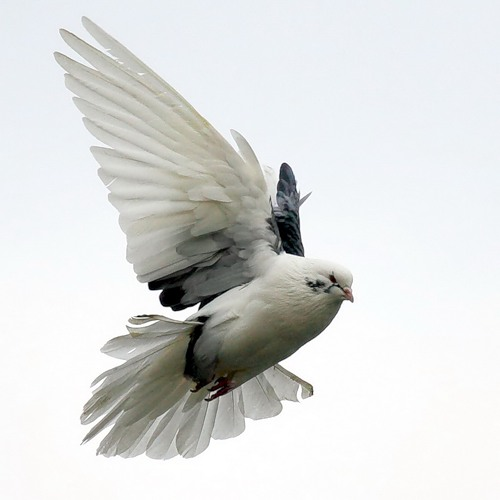 Птички - 4