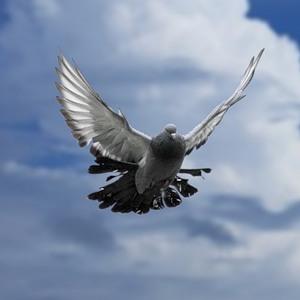 Птички - 8