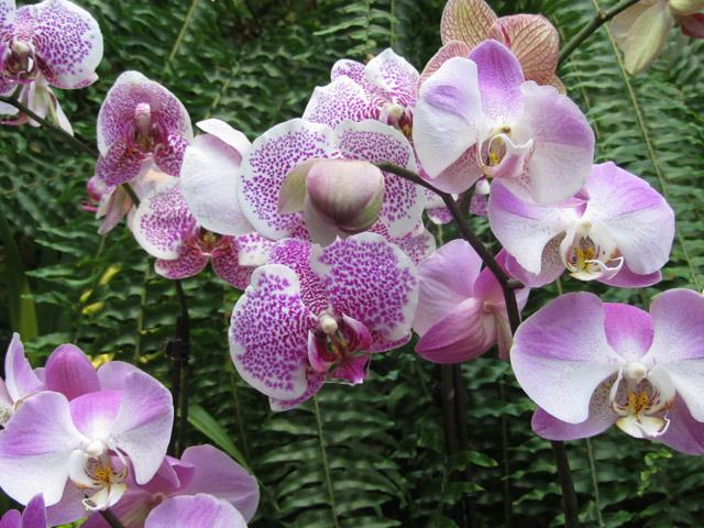орхидеи 04