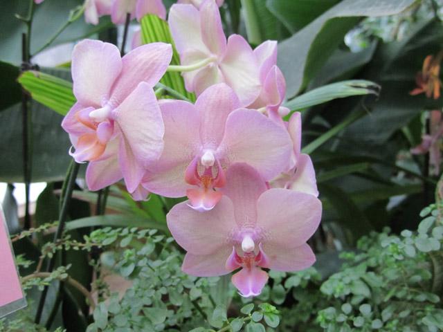 орхидеи 06