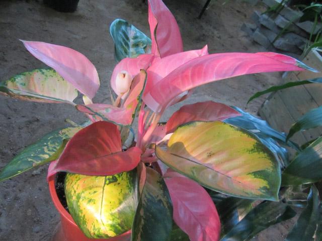 орхидеи 07