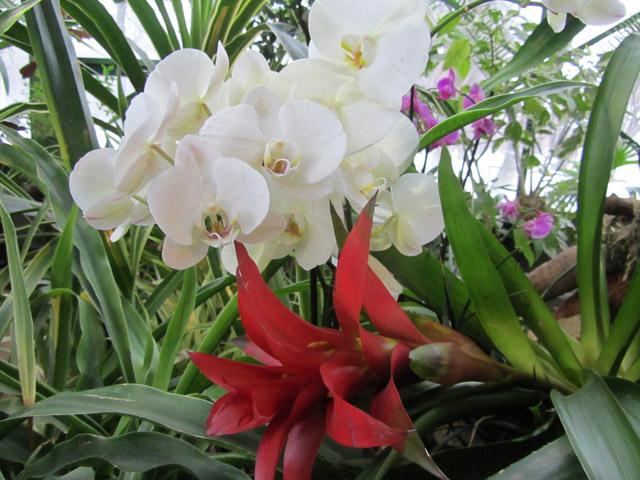 орхидеи 08