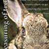 rabbit+titre