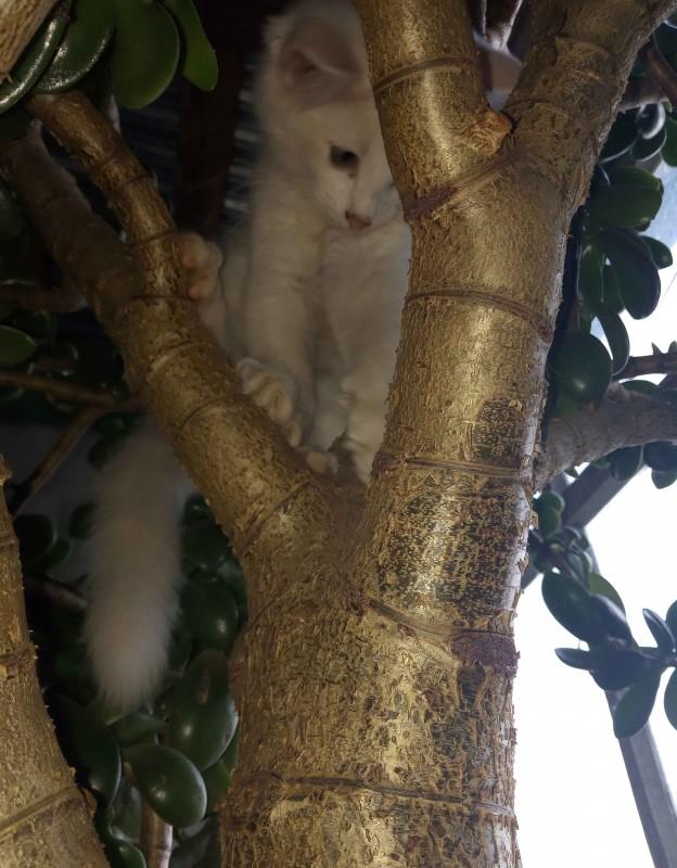 Юби и денежное дерево