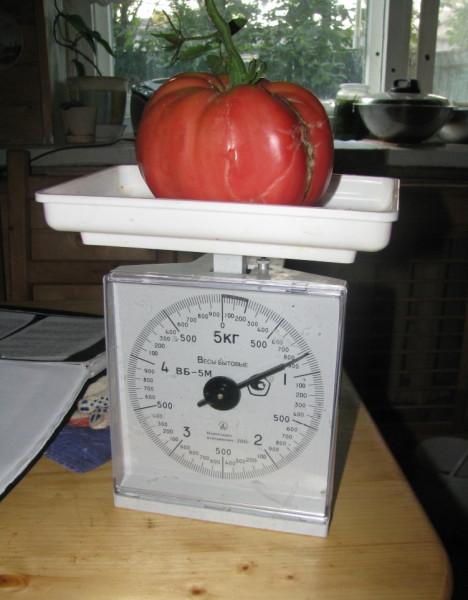 1 наш помидорка 2011