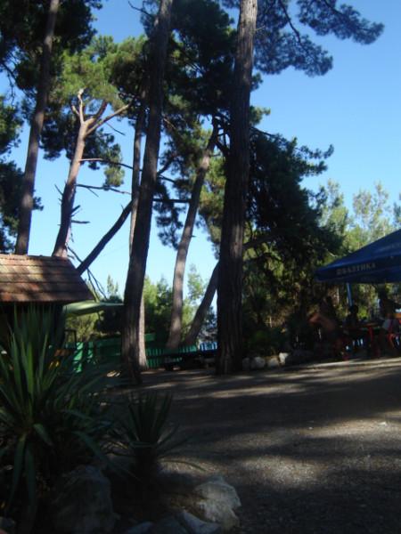 пицунда - пляж - парк1