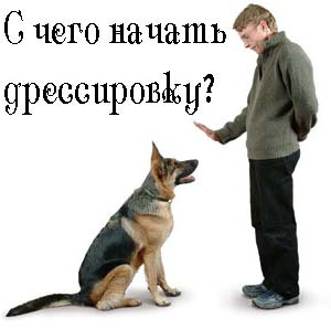 Samostoyatelnaya-dressirovka-sobak.jpg