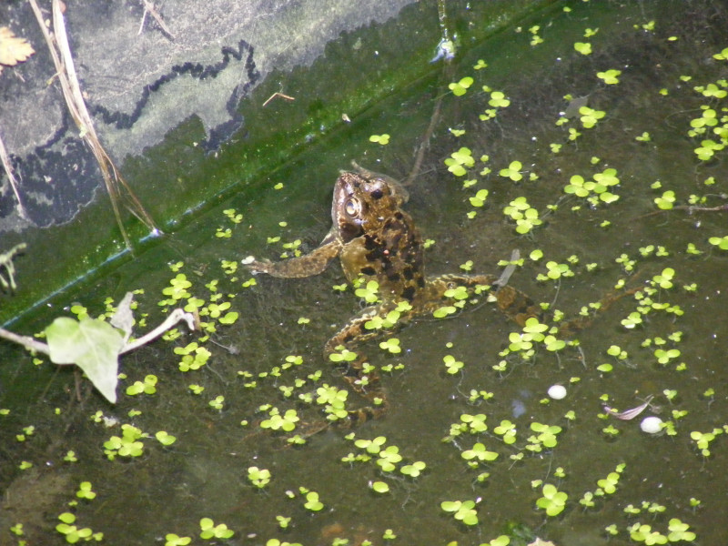 frogs01
