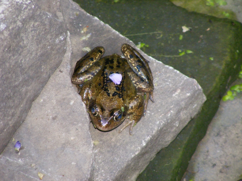 frogs02