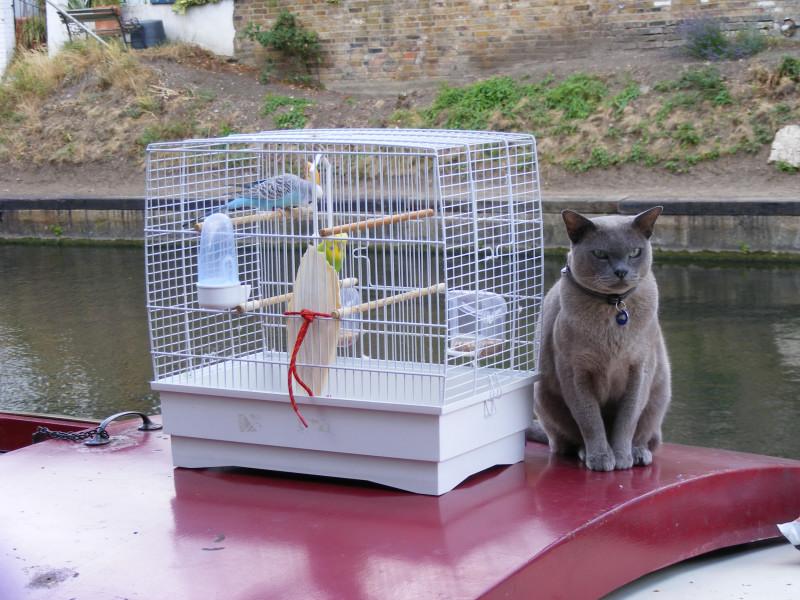 cat-birds08
