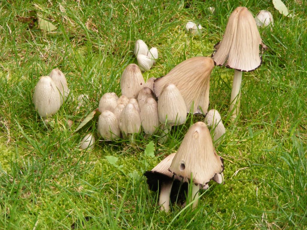 mushrooms02