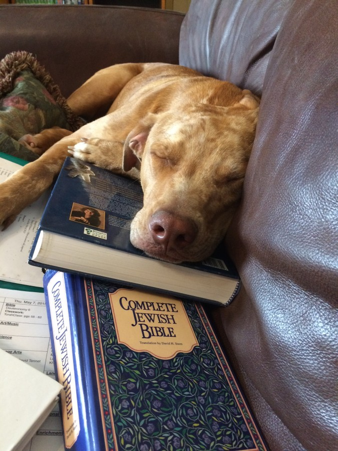Loki hitting the books