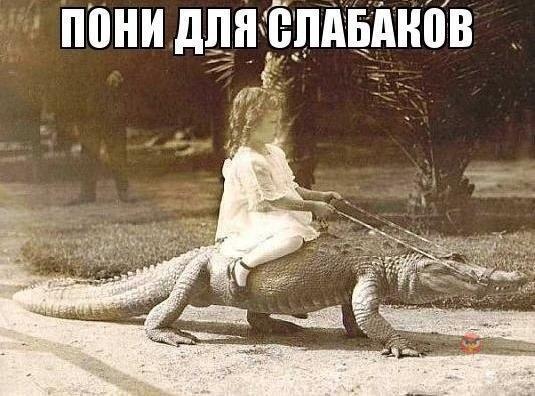 прикол крокодил