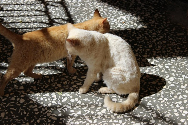 агиа лавра коты
