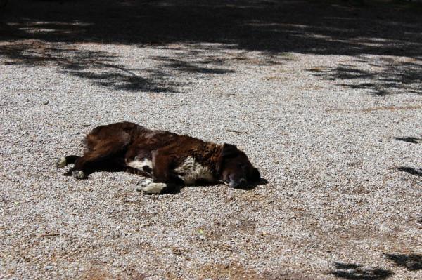агиа лавра пес