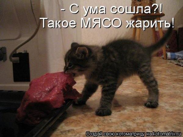 прикол котенок мясо