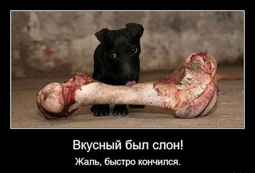 прикол собака с костью