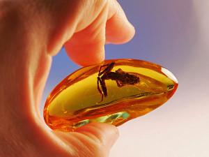 насекомое в янтаре
