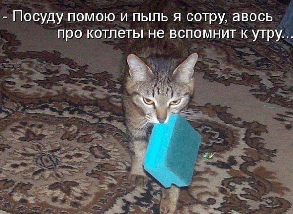 прикол кот котлеты