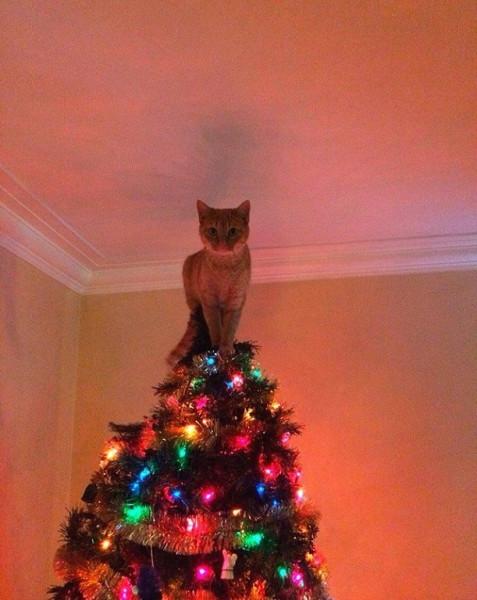 прикол кот на елке