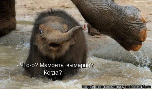прикол мамонты