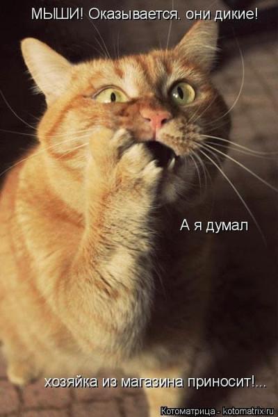 прикол кот мыши