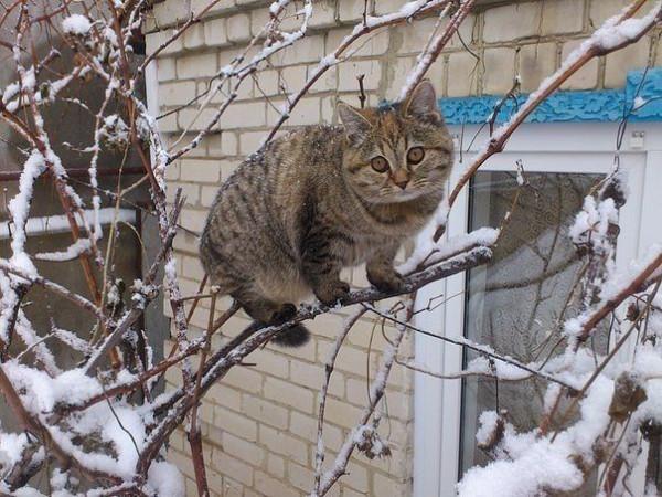 прикол кот на ветке