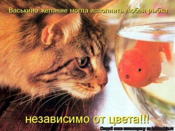 прикол кот рыба
