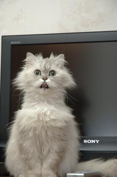 прикол кот у телевизора