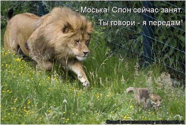 прикол лев моська