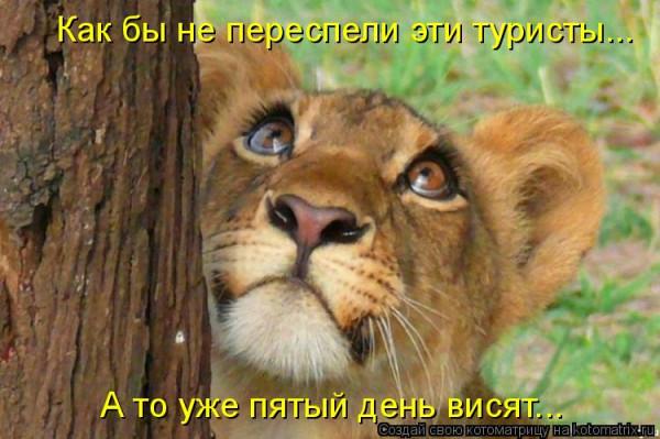 прикол лев туристы
