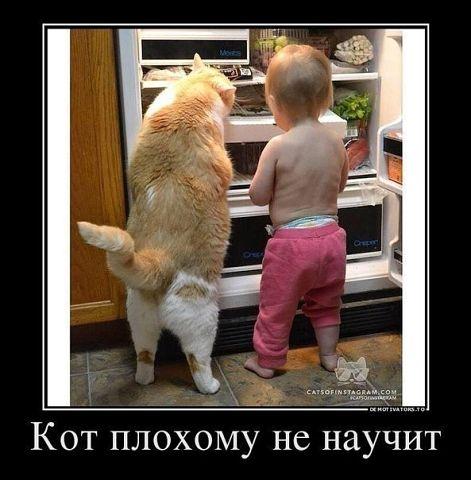 прикол кот плохому не научит