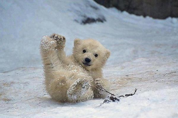 прикол медведь катается