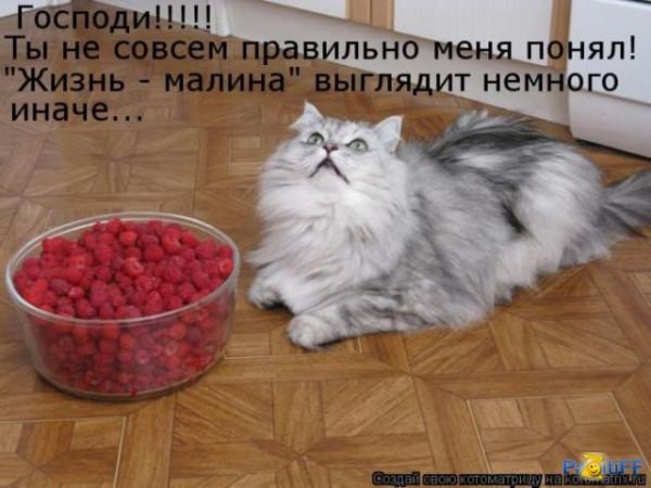 прикол кот малина