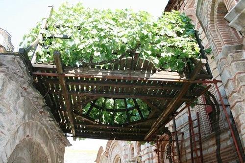 чудотворная лоза св. Симеона Мироточивого в сербском монастыре Хиландар
