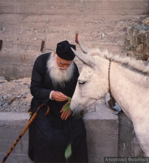 Старец Ефрем Катунакский с осликом