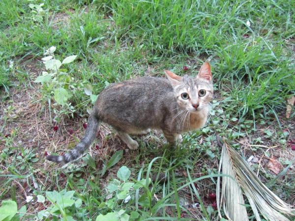 греция 1 таверна кот