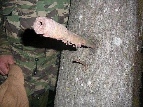 вросшие в деревья 7