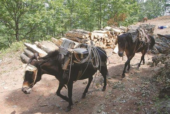Подвижники в миру- Николай Неоказис ослики