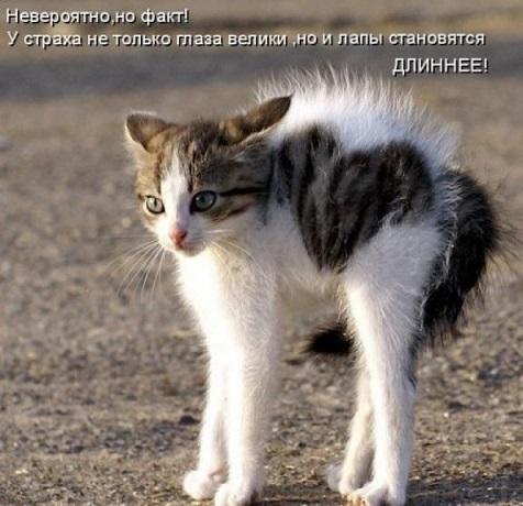 прикол кошка 1