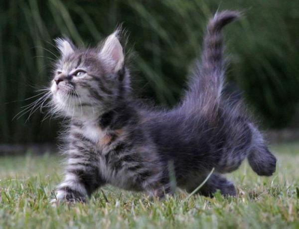 прикол кошка 3
